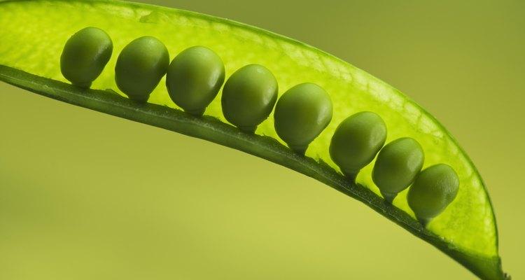Los guisantes contienen proteínas saludables.