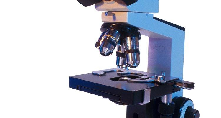 Un microscopio ayuda a los científicos a ver los organismos que son tan pequeños que pasan desapercibidos ante el ojo humano.