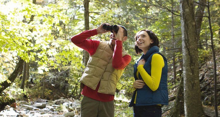 The high quality of Swarovski binoculars makes them a popular choice for identifying birds from a distance.