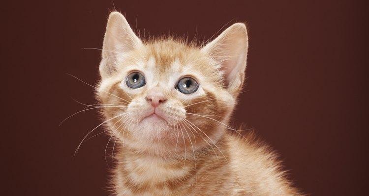 Los pelos de gato pueden viajar por el aire y aterrizar en tu ojo.