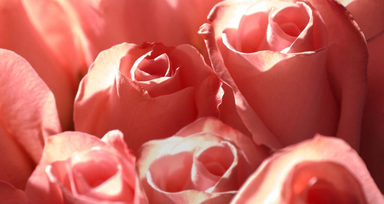 Las rosas rosadas pueden significar admiración y gracia.