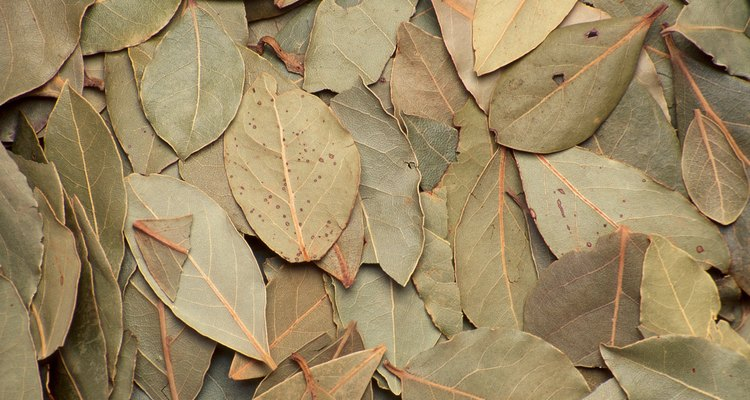 The bay leaf comes from laurel trees.