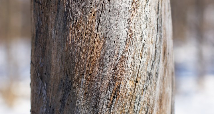 A dead tree may be missing bark.