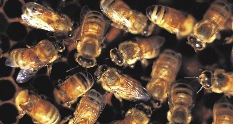 O mel ecológico não tem antibióticos