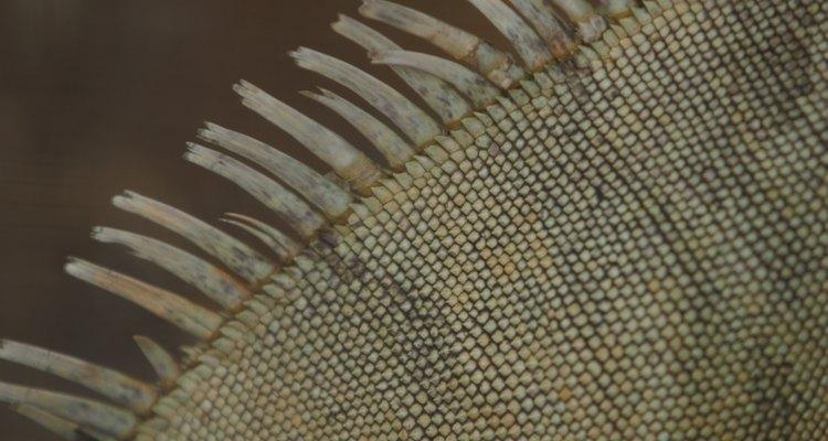 La piel escamosa de los reptiles les ayudaba con los cambios clímaticos.