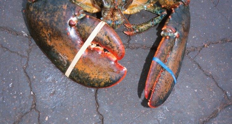 Tire a carne da lagosta para cozinhar depois