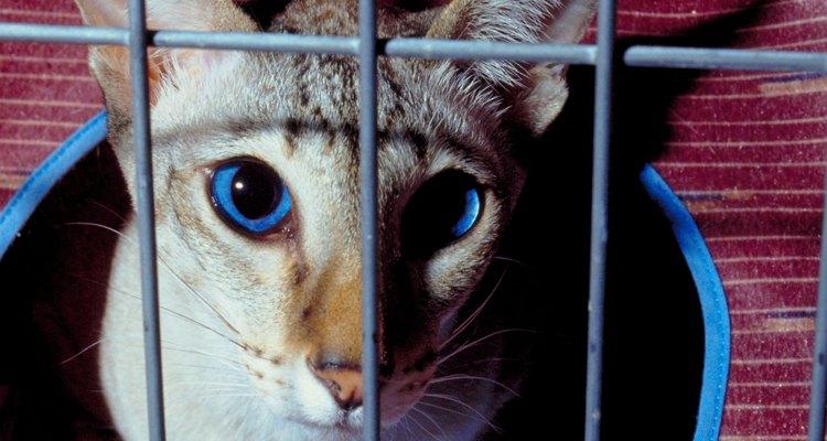 Atraia um gatinho preso para fora de um buraco com um petisco