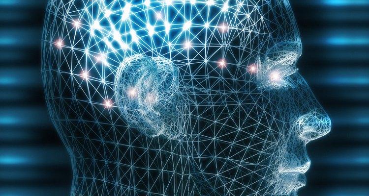 Os lados direito e esquerdo do seu cérebro se comunicam através de nervos