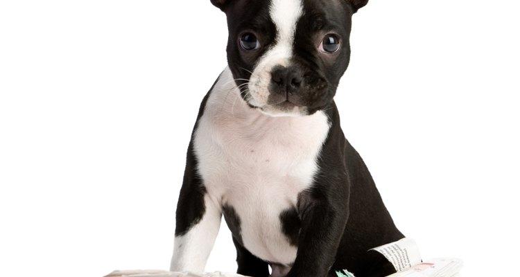 Cães também podem sofrer de epilepsia.