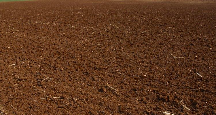 El color rojo del suelo indica la presencia de óxidos férricos.