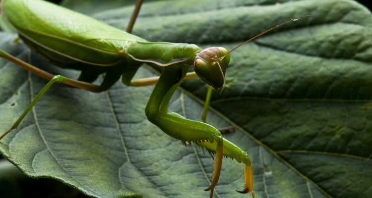 No hay muchos insectos que se alimenten de los tallos o troncos de los árboles.