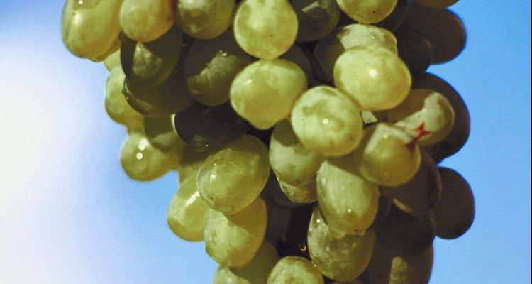 Los gusanos en las uvas pueden dañar la planta y reducir la cosecha.