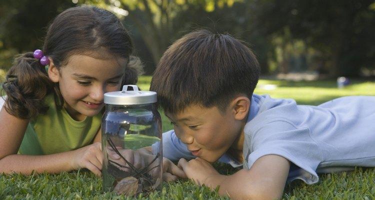 Las actividades científicas desarrollan destrezas de observación.