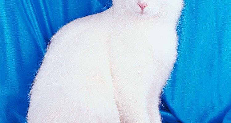 A insuficiência renal é responsável pela morte de muitos gatos idosos