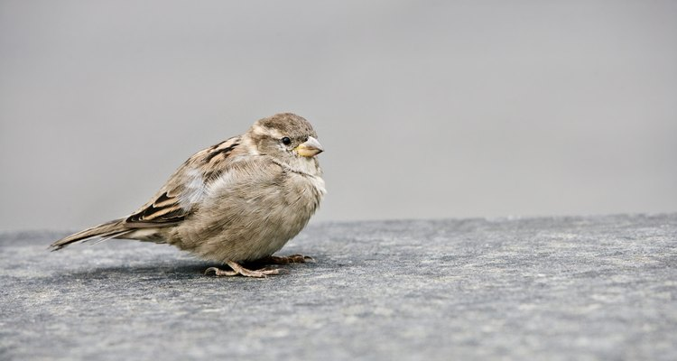 Remove bird droppings from fabric carefully so they don't spread.