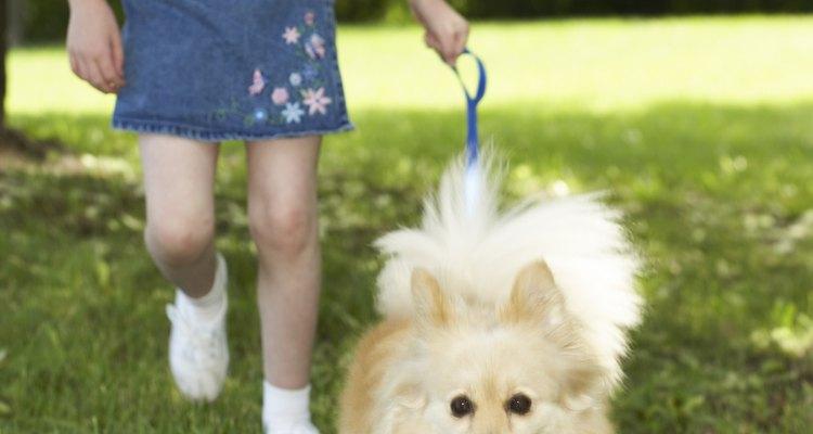 Os lulus-da-pomerânia são cães fofos com bastante pelo. Alguns proprietários os tosam, enquanto outros não acham que isso seja uma boa ideia