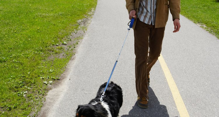 Retractable leashes are more likely to cause leash burn.