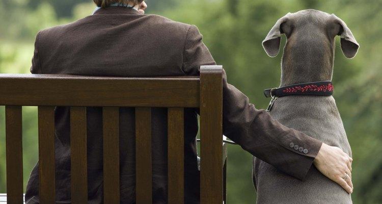 """O seu cachorro provavelmente está apenas tentando te agradar com um """"presente"""""""