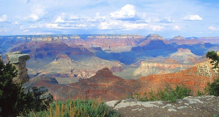 Diversas especies de plantas viven en las mesetas.