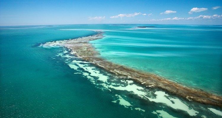 Detener la contaminación del océano reducirá la pérdida de muchas formas vegetales, así como de vida marina.