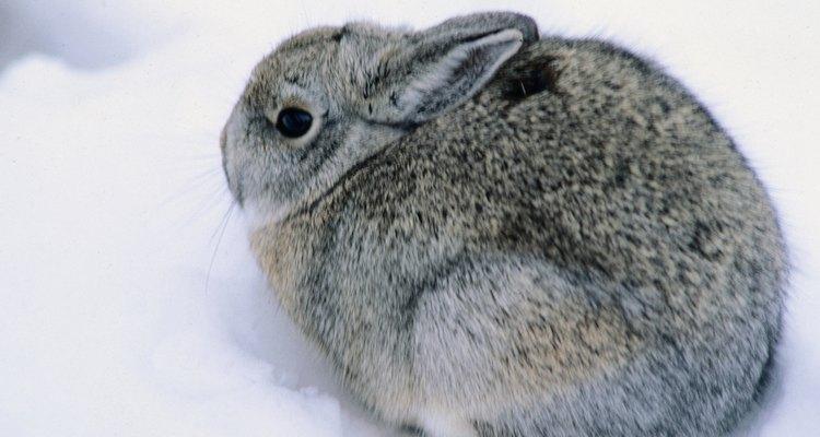 Os coelhos são ativos nas horas mais escuras do dia.