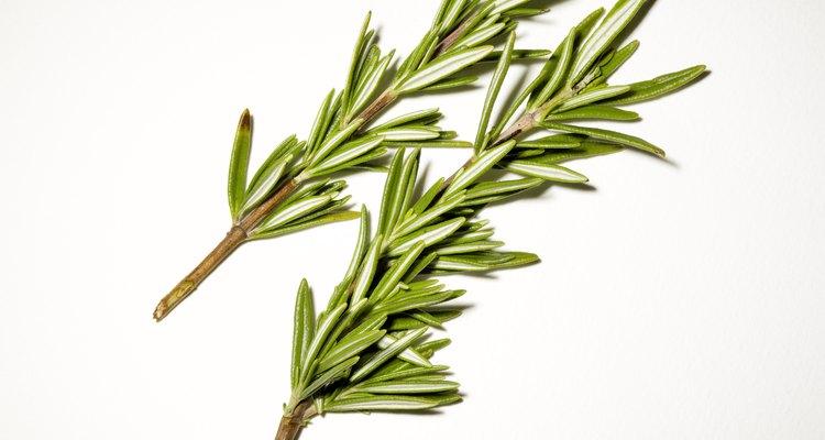 El romero es una de las numerosas plantas que son naturalmente repelentes.