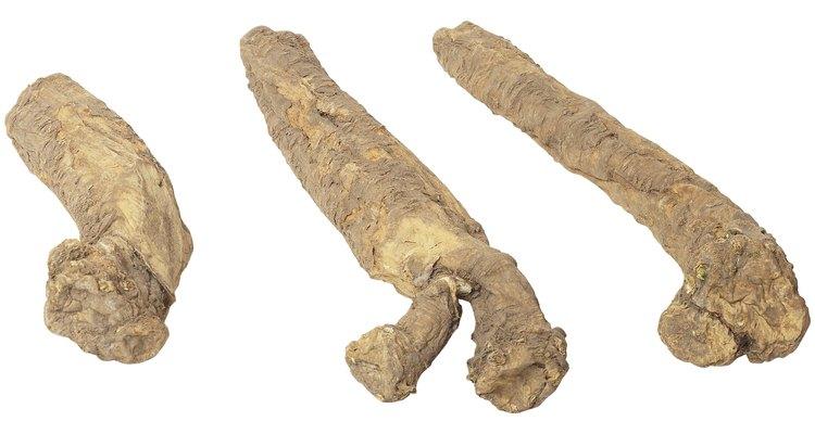 Las raíces de yuca o mandioca parecen dedos largos y marrones.
