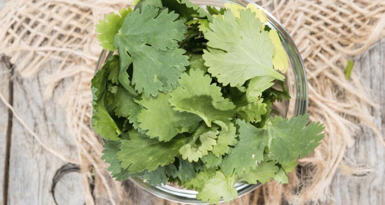 Como semilla, el cilantro se considera una especia. La planta de cilantro, conocida como cilantro, es una hierba popular en la cocina española.