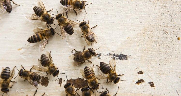 Prueba uno de varios remedios caseros para repeler o matar a las abejas.