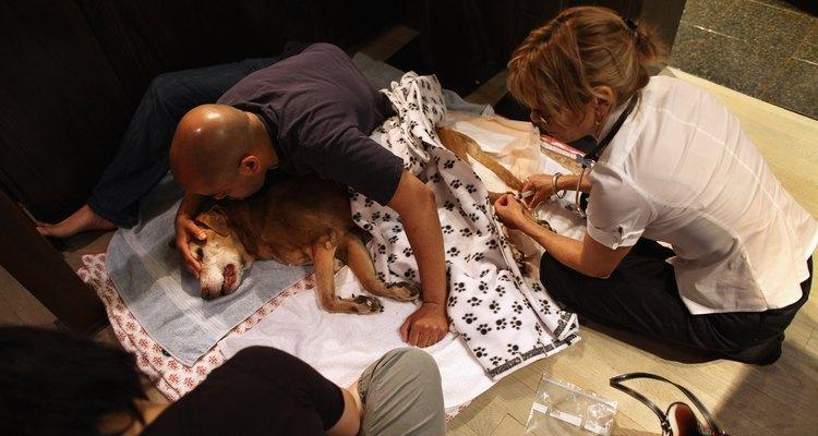 Es muy importante acompañar a tu perro en sus últimos momentos.
