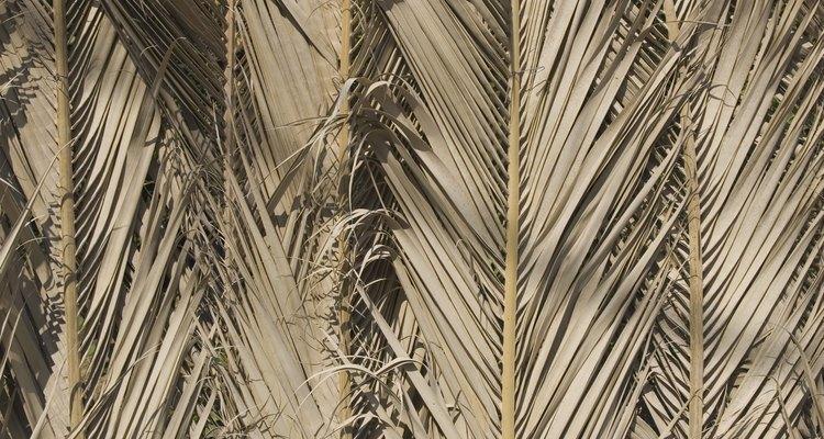 Folhas de coqueiro