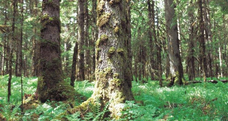 As florestas tropicais sazonais como esta, localizada na China, fazem fronteira com muitas das grandes florestas tropicais