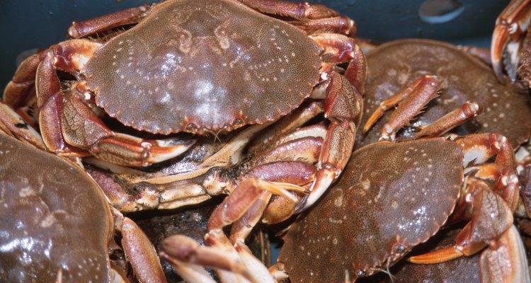 O caranguejo é baú cheio de carne esperando para ser aberto