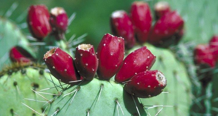 Para de fertilizar las plantas suculentas a finales del otoño.
