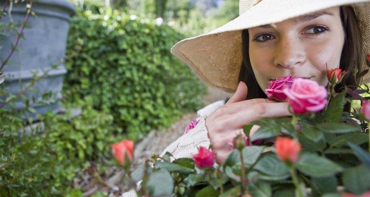 Existen más de 230000 tipos de plantas con flores.