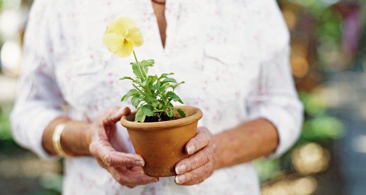 La chía proviene de la planta Salvia hispánica y es nativa de México.