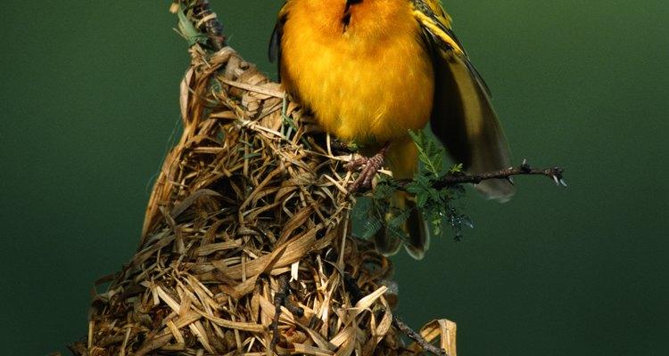 Na natureza, os pássaros constroem seus ninhos com galhos secos e outros materiais