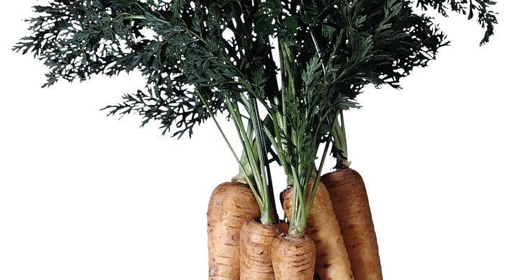 Like carrots, parsnips are enlarged roots.