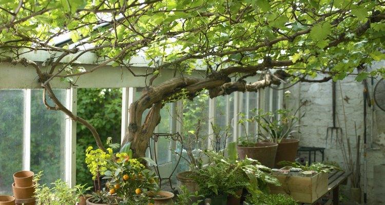 Una de las ventajas de utilizar un invernadero es que puedes controlar el medio ambiente.