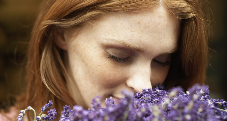 The scent of lavender is powerful and evocative.