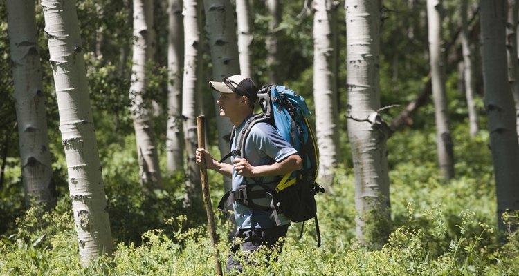 Los excursionistas pueden utilizar las bayas rojas silvestres como un tentempie.