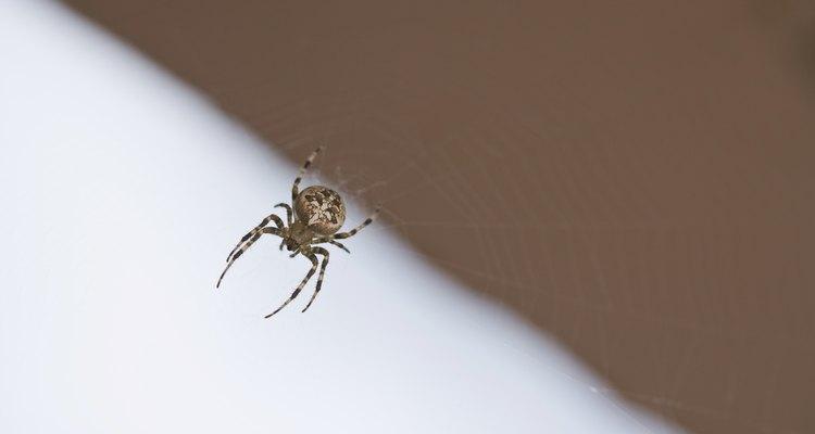 Quase nenhum lugar está fora dos limites de aranhas — incluindo sua cama