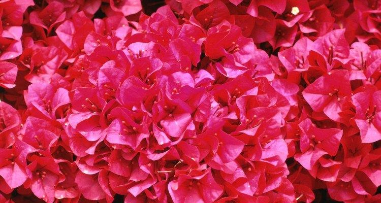 Mantenha suas flores frescas e bonitas com um conservante caseiro