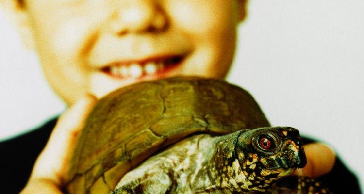 As pequenas tartarugas de água doce são mais comumente adquiridas como animais de estimação