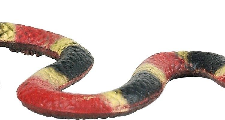 Las serpientes del coral tienen un patrón de líneas que son rojas, amarillas, negras y nuevamente amarillas.