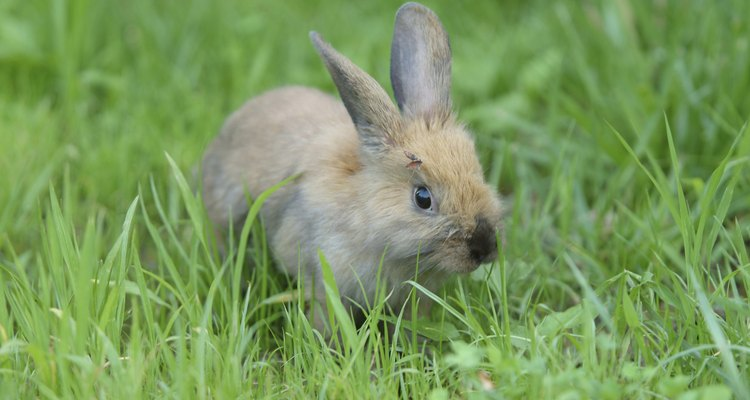 Always supervise your pet rabbit closely when outdoors.