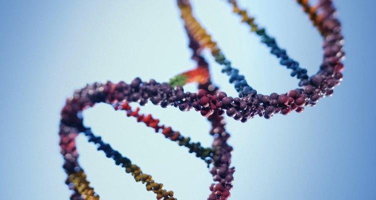 Una porción del ADN