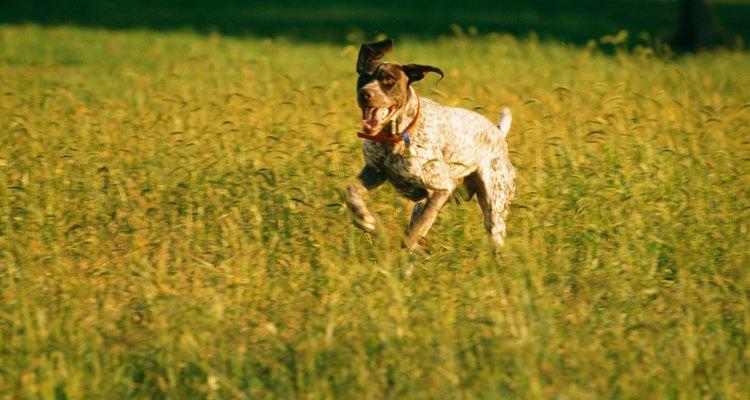 Los perros pueden soñar con cazas.