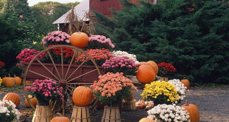 Plantar flores enfrente de tu casa puede añadir interés a tu jardín.