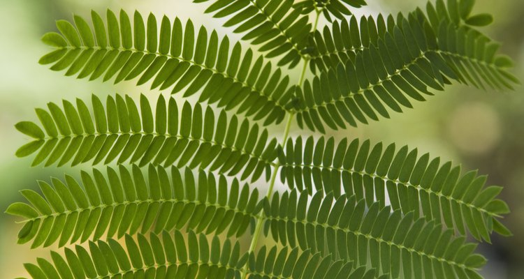 Several animals and many insects eat ferns.